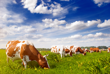 healthy diet programs include grass-fed beef