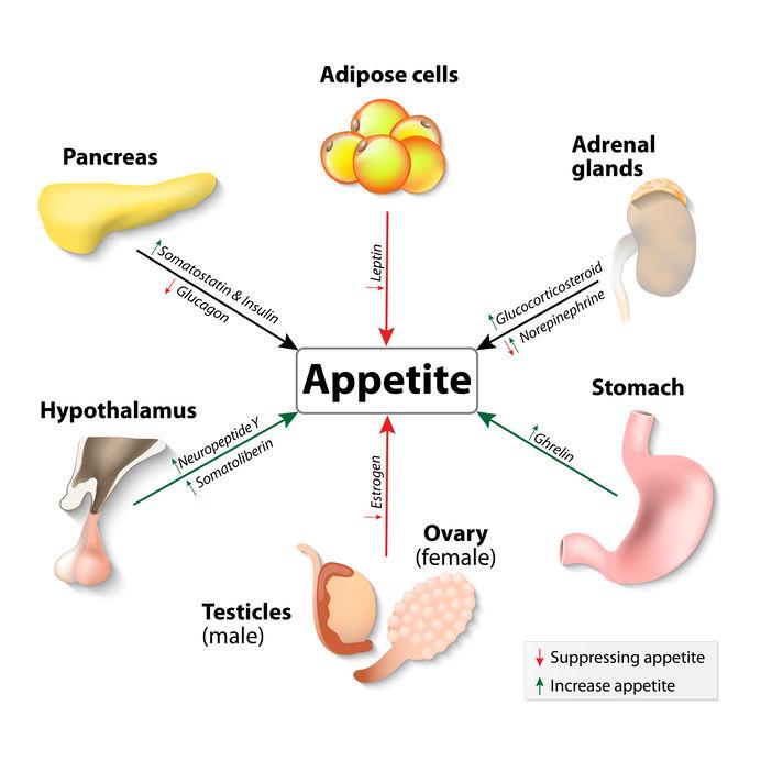 hormone diets