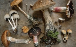 mushrooms are good for diabetes diets