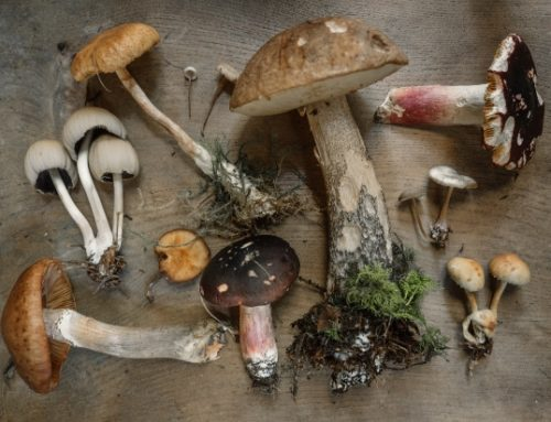 Mushrooms for Diabetes Diets
